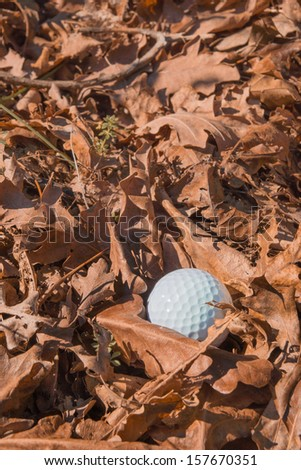 A golf ball resting amongst dry brown leaves - stock photo