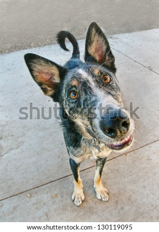 a goofy dog looking at the camera - stock photo
