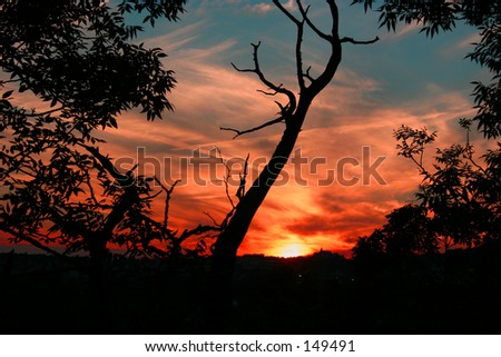 A gorgeous sunset as seen through some trees in Branson MO USA - stock photo