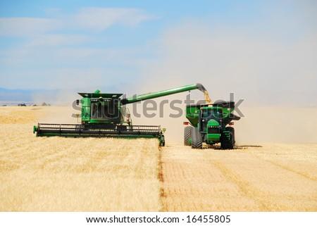 "A grain combine or ""thrasher"" unloads a bin of grain into a ""tender"" trailer while continuing to harvest grain. - stock photo"