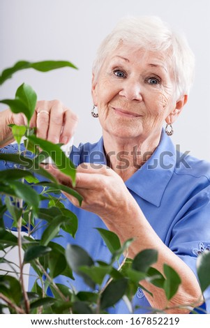 A grandma taking care of a leafy plant