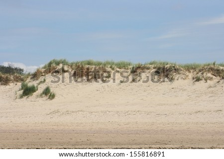 A grass-covered dunes with sparse