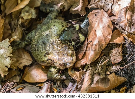 a grass snake has captured a toad