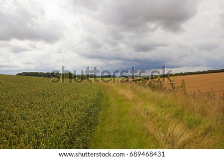 a grass track near green wheat fields overlooking patchwork fields under a summer cloudy sky in the yorkshire wolds