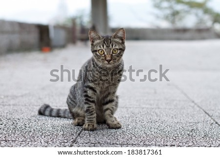 A gray and black striped cat sitting on the ground. - stock photo