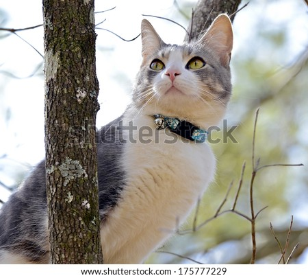 A gray and white kitten in a tree looking up watching the birds.
