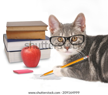 A gray cat is holding a pencil with a scribble and books on a white isolated background for a training or humor concept. - stock photo