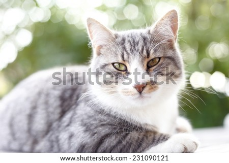 a gray cat portrait with green background