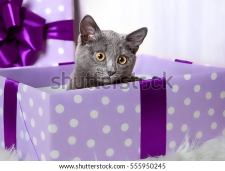 A gray kitten sits in a lilac gift box