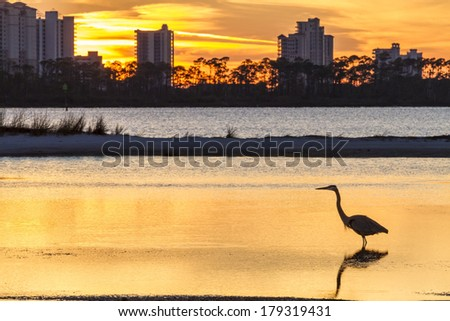 A Great Blue Heron silhouetted by golden sunset waters against Perdido Key, Florida - stock photo