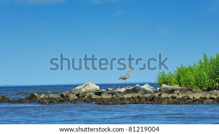 A Great Blue heron watching over the Chesapeake Bay in Maryland on a summer day - stock photo