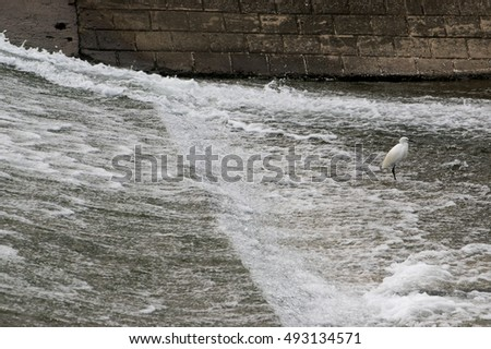 A great egret on a dam.