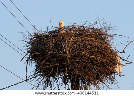 A great stork nest on high lamppost with one bird sitting inside - stock photo