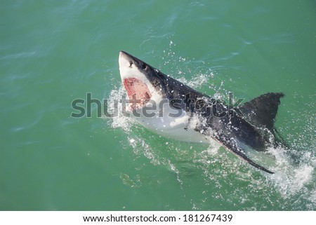 A Great White Shark breaching the water with its mouth open - stock photo
