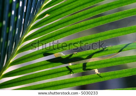A green anole on a Sago Palm. - stock photo