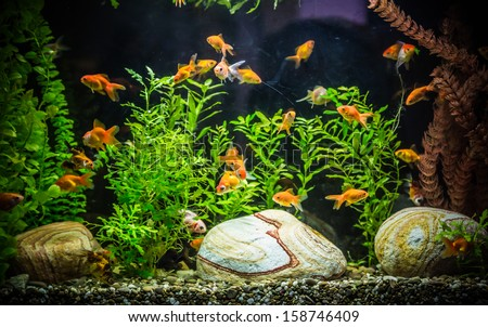 how to set up powerheads in freshwater aquarium