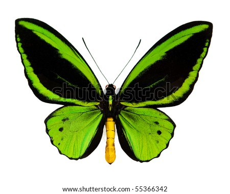 A green butterfly isolated on white - stock photo