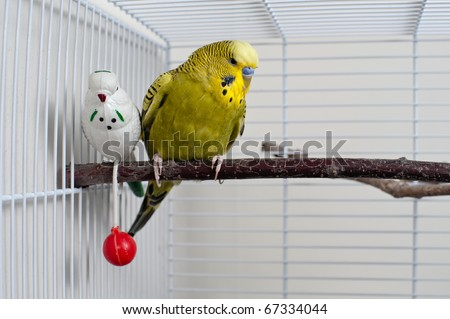 A green domestic budgie sitting with his toy friend. - stock photo