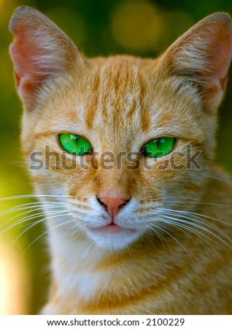 a green eyed carroty cat head