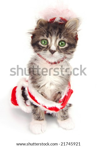 A green eyed kitten wearing a Christmas outfit. - stock photo