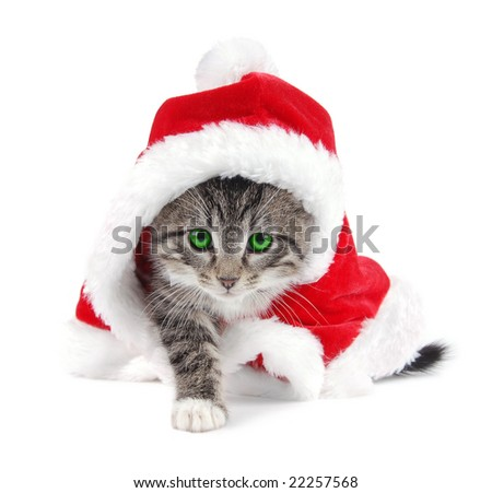 A green eyed kitten wearing a Christmas outfit.