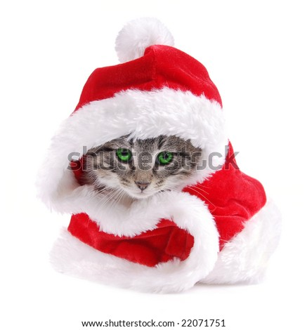 A green eyed kitty wearing a Santa outfit. - stock photo