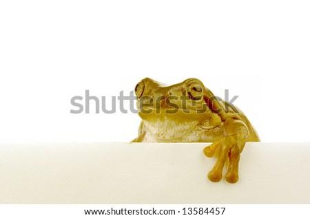 A green frog climbing over a white wall - stock photo