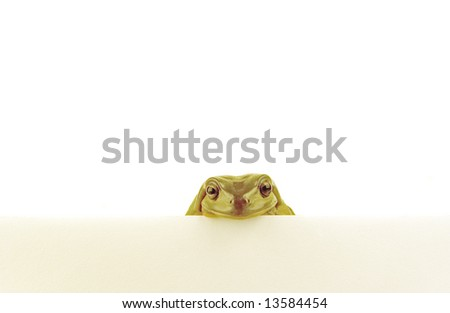 a green frog looking over a white wall on white background