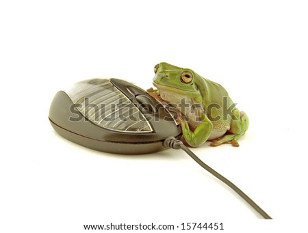 a green frog using a computer mouse