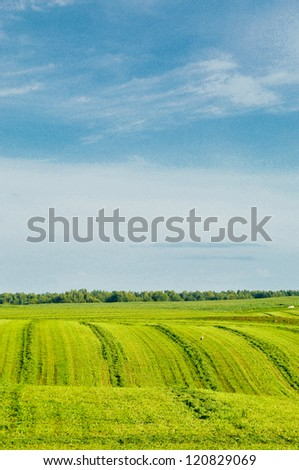 A green grass and blue sky are a background of landscape