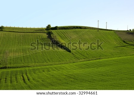A green grass field with blue sky