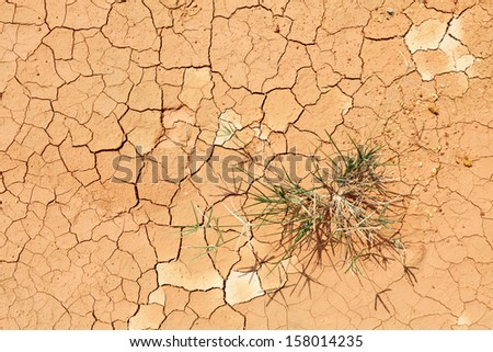 A green grass patch on a dry cracking desert floor.  - stock photo