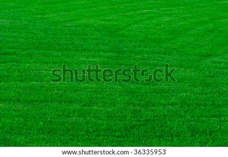 a green grassy lawn , background - stock photo