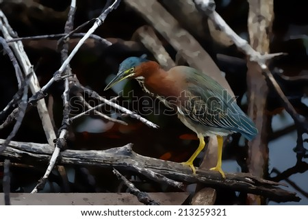 A green heron in everglades waiting patiently for a catch illustration - stock photo