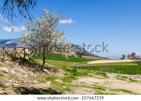 A Green landscape with Tree - stock photo