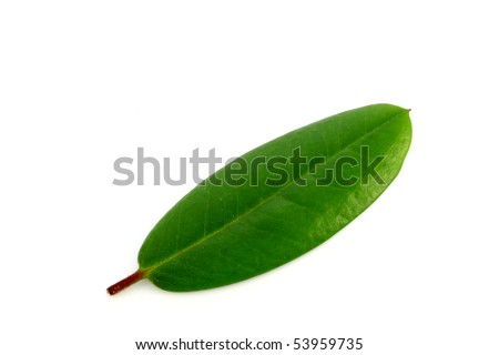 a green leaf isolated on white