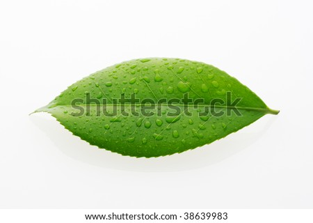 A green leaf with water drops on white background