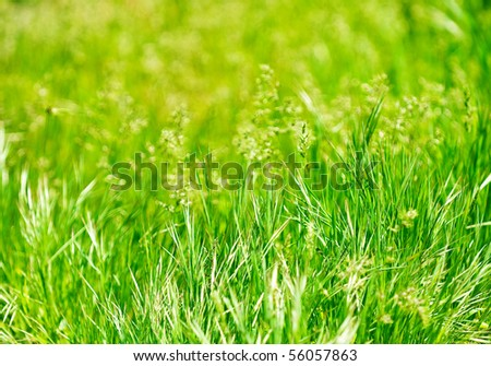 a green meadow is swardy as a background