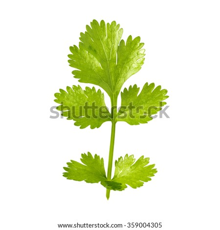 A green parsley leaf isolated on white background