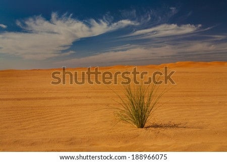 A green plant growing in a desert, Morocco - stock photo