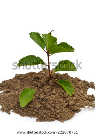 a green plant on the white backgrounds  - stock photo
