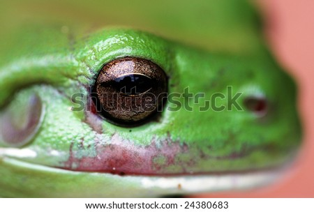 A green tree frog held by a young boy - stock photo