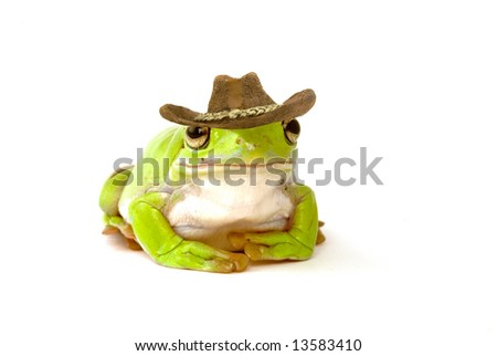 a green tree frog on a white background