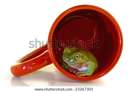 A green Tree from in a red coffee cup on white - stock photo