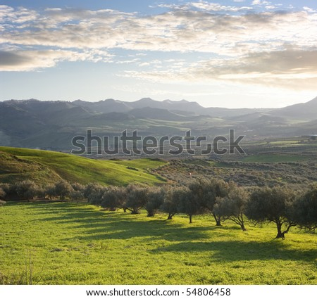 a green valley with olive trees of sicilian hinterland at the twilight - stock photo