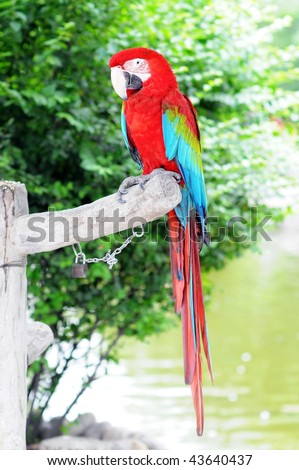 a green wings macaw with an attitude posing for the camera - stock photo