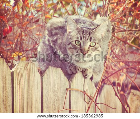 a grey cat on a fence with an autumn background - stock photo