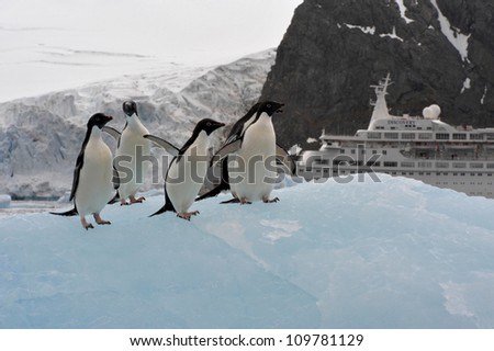 A group of Adelie Penguin (Pygoscelis adeliae) standing on an iceberg at Hope Bay in the Northern Tip of the Antarctic Peninsular.