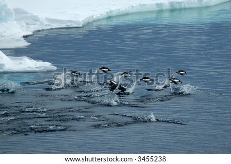 A group of adelie penguins jumping over darkblue antarctic waters - stock photo