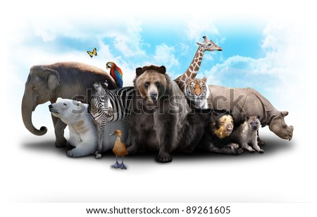 A group of animals are grouped together on a white background. Animals range from an elephant, zebra, bear and rhino. Use it for a zoo or friends concept.